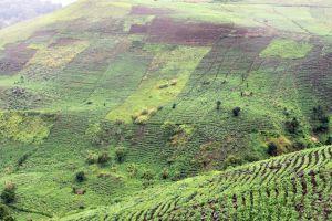 L'ACDIC sensibilise les députés Camerounais sur la cession de terres nationales aux étrangers