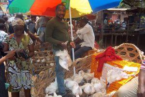 Marché  Mvog-Ada de Yaoundé : Les vendeurs de poulet défient l'autorité publique